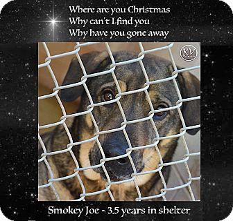 German Shepherd Dog/Catahoula Leopard Dog Mix Dog for adoption in Sautee, Georgia - Smokey Joe