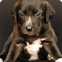 Hound (Unknown Type) Mix Puppy for adoption in Newland, North Carolina - Wrigley
