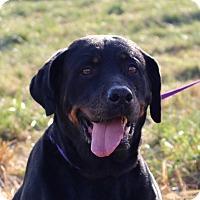 Adopt A Pet :: Nina - Lisbon, IA