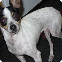 Adopt A Pet :: Chiquita - Boise, ID