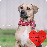 Adopt A Pet :: Timber - San Leon, TX