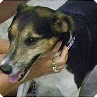 Adopt A Pet :: Koby - Orlando, FL