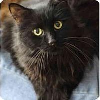 Adopt A Pet :: Farrah - Columbus, OH
