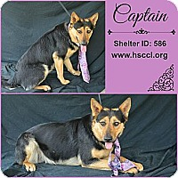 Adopt A Pet :: Captain - Plano, TX