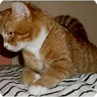 Adopt A Pet :: Lance - Jacksonville, FL