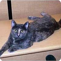 Adopt A Pet :: Sophie - Irvine, CA