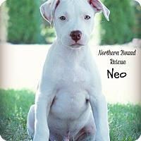 Adopt A Pet :: Neo - Southington, CT