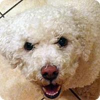 Adopt A Pet :: GEORGE - East Hanover, NJ
