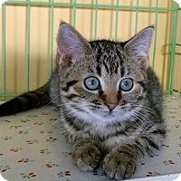 Adopt A Pet :: Kiki - Island Park, NY
