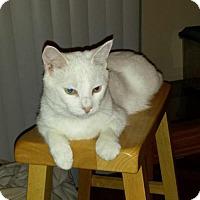 Adopt A Pet :: Walter White - Irving, TX