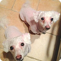 Adopt A Pet :: Summer - East Hanover, NJ