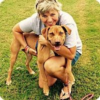 Adopt A Pet :: Tobin - Uxbridge, MA