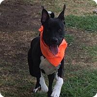 Adopt A Pet :: Jojo - West Hartford, CT