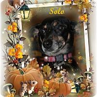 Adopt A Pet :: Ceely - Crowley, LA