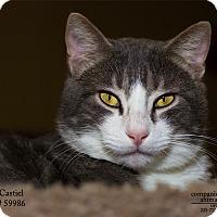 Adopt A Pet :: Castiel - Baton Rouge, LA