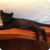Adopt A Pet :: Mortima - Chicago, IL