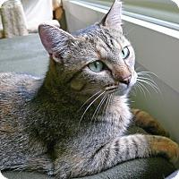 Adopt A Pet :: Sophia - Chicago, IL