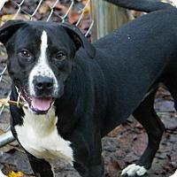 Adopt A Pet :: Booker - Reidsville, NC