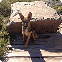 Adopt A Pet :: Hannah - Wichita Falls, TX