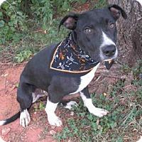 Adopt A Pet :: DEXTER - Oklahoma City, OK