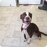 Adopt A Pet :: Martha Washington - Wichita, KS