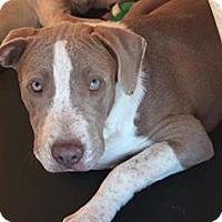 Adopt A Pet :: Chandler - Sylacauga, AL