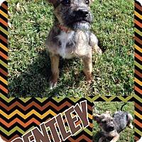 Adopt A Pet :: Bentley - Lexington, NC