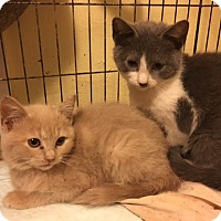 Adopt A Pet :: Zachary - Delmont, PA