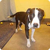Adopt A Pet :: WILLOW - Upper Marlboro, MD