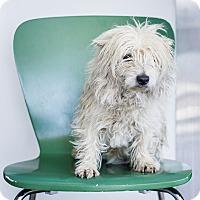 Adopt A Pet :: Ian - Berkeley, CA