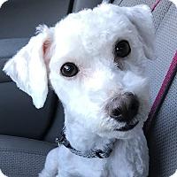 Adopt A Pet :: Crosby - Nanuet, NY