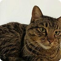 Adopt A Pet :: Joanna Cc 5696 - Joplin, MO