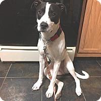 Adopt A Pet :: Spots - Willingboro, NJ