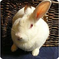 Adopt A Pet :: Layne - Newport, DE