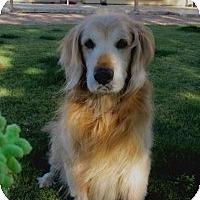 Adopt A Pet :: Martibear - Scottsdale, AZ
