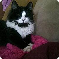 Adopt A Pet :: Maccabe - Dallas, TX