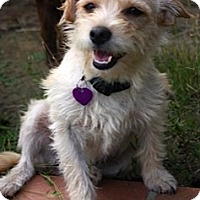 Adopt A Pet :: PYPER - Mission Viejo, CA