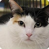 Adopt A Pet :: Vesper - Sacramento, CA