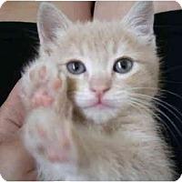 Adopt A Pet :: Squash - Davis, CA