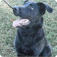 Adopt A Pet :: Champ - In Maine!! - kennebunkport, ME