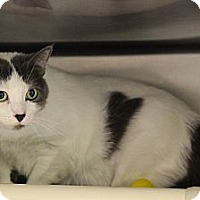 Adopt A Pet :: Mow Mow - Chicago, IL