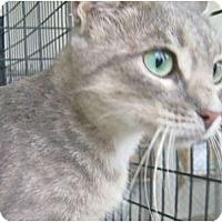 Adopt A Pet :: Tulia - Mobile, AL