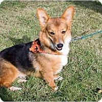 Adopt A Pet :: Sally - Inola, OK