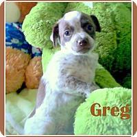 Adopt A Pet :: GREG - Higley, AZ