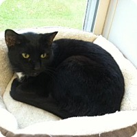 Adopt A Pet :: Aida - Come Visit Me @ Cavanaugh's Collars! - Harrisburg, PA