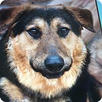 Adopt A Pet :: DAVID VON DAGOBERT - Los Angeles, CA