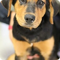 Adopt A Pet :: May - Mt. Prospect, IL