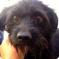 Adopt A Pet :: David-ADOPTION PENDING - Boulder, CO