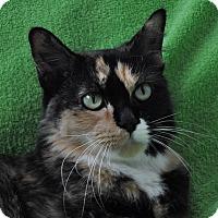Adopt A Pet :: Reese - Gaithersburg, MD
