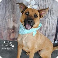 Adopt A Pet :: LIBBY - Conroe, TX